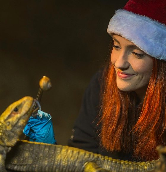 The Secret Life of the Zoo at Christmas